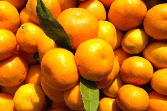Obavijest proizvođačima  mandarina!