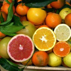 Obavijest proizvođačima agruma