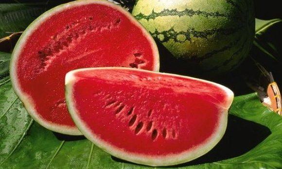 Obavijest proizvođačima lubenica i dinja